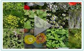 Aromatic Plants